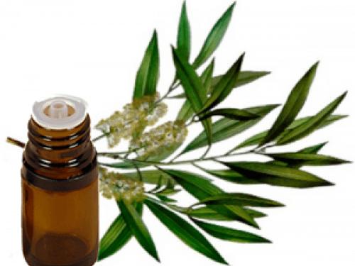 10 utilizzi del Tea Tree Oil